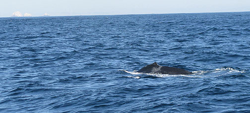 Humpback with Farallones in distant southeast (upper left).
