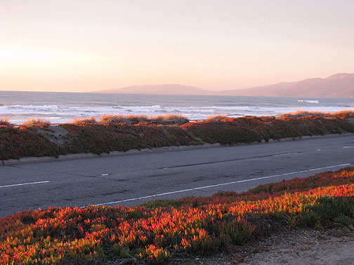 Ice plant on Great Highway ablaze in golden sunset light.