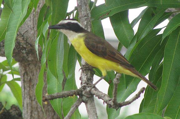 OK, ornithologists! Name this bird!