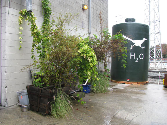 Permaculture rain harvesting at FarmLab.