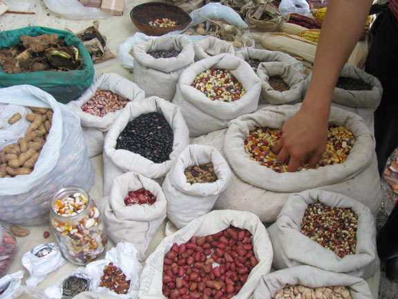 A Free Seed exchange at the Peace Camp.