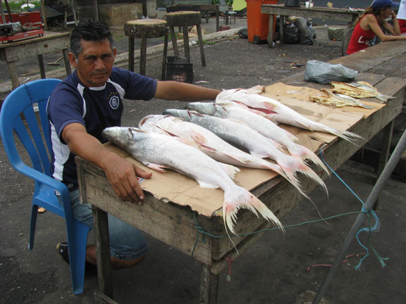 Fresh fish in Icoaraci.