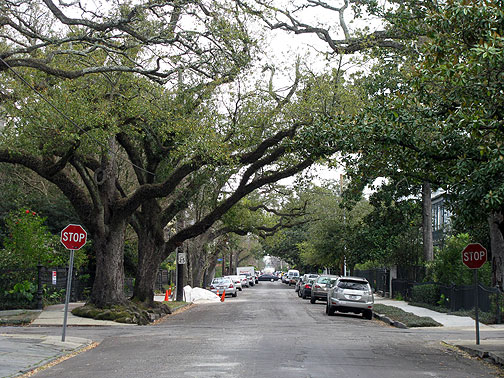Gotta love old oak trees providing a canopy over your street!
