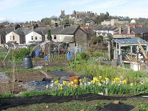 Lancaster castle on distant hilltop, allotment (community garden) in foreground.