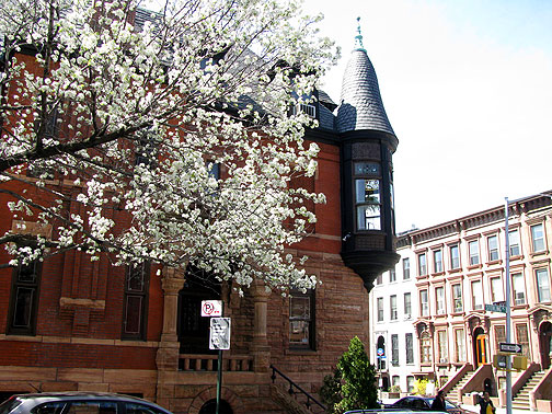 Blossoming tree on 6th Avenue in Park Slope, Brooklyn.