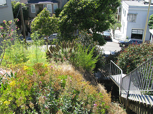 Kingston stairs on west side of Bernal, older and more established.