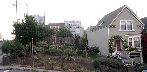 This plot of land has been dedicated by its owner to a Permaculture garden, 18th and Rhode Island.