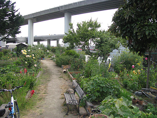 Freeways swoop incongruously over Mission Creek community garden, the creek itself, and its dozens of houseboat residents.