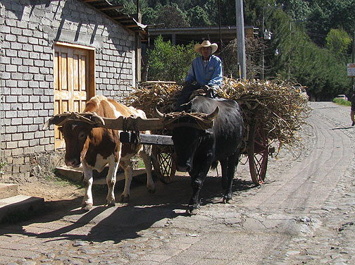 Oxcart on hand-paved road between Zirahuen and Santa Clara del Cobre.