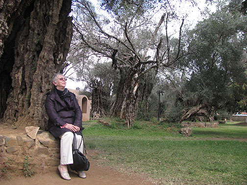 My mother shares a moment with the 400-year-old olive trees of Tzintzuntzan.