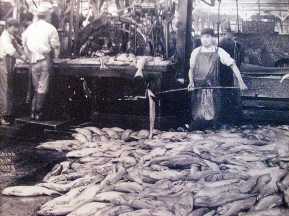 These Chinese fish processors were a motivation for the invention of the device in the next photo.