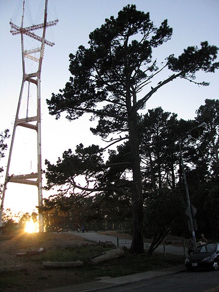 This tree was full too, and the sun was just setting at the foot of Sutro Tower, still one of the oddest structures in the City.
