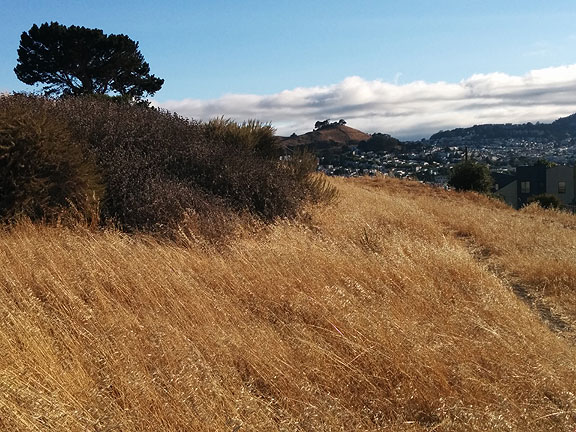Starr King open space with Bernal Heights in distance behind... one of the gorgeous walks I've been on lately.