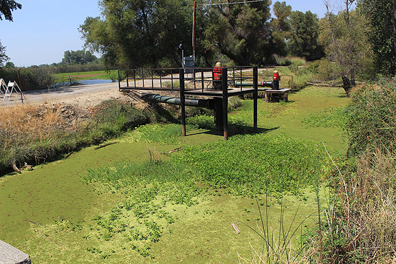 Here's an algae-covered pond supplying water for the wetlands on the other side of the levee (next two photos).