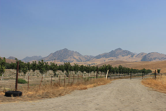 North of Sutter Buttes the area is filled with almond orchards, which though very parched seem to be doing ok.