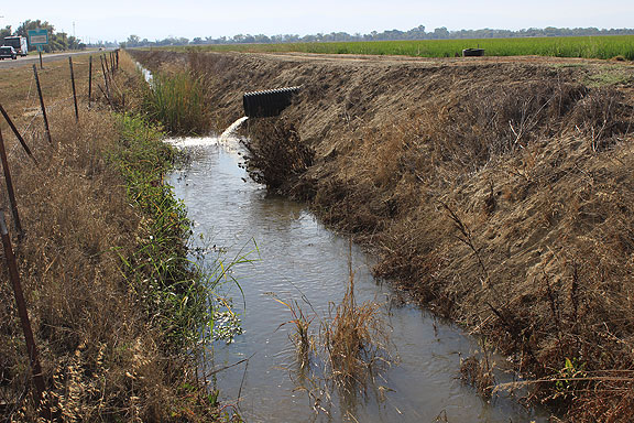 Plenty of water being used to grow rice along Highway 162, which we saw in abundance on our way back to San Francisco.