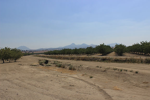 Dry orchards north of Sutter Buttes.