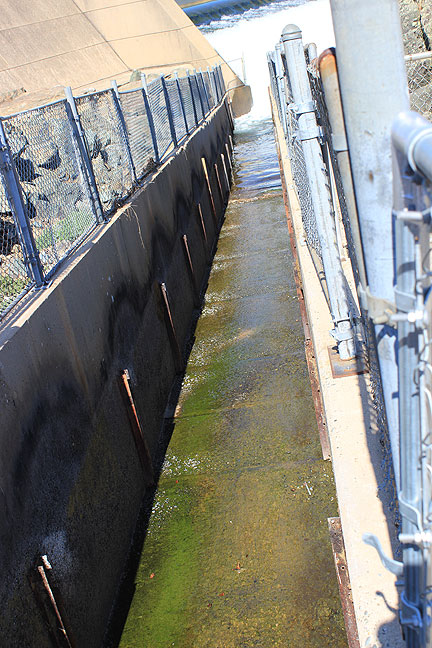 "Fish hatchery diversion channel, where they push the salmon to ""milk"" them of their eggs, but here it is dry."