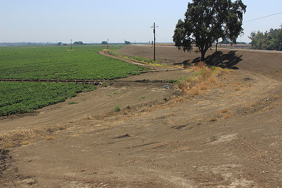 You can see the depth of the tomato fields next to the levee in this image.