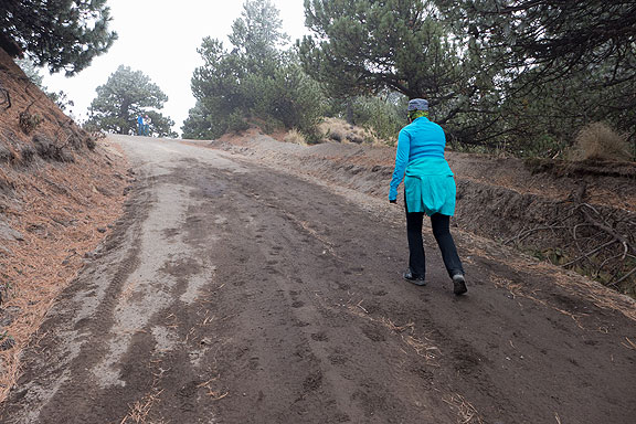 After we got to the end of the road we had to walk an hour to get to the top. It was cold, windy, steep, and lots of frost was forming on the pine needles around us.