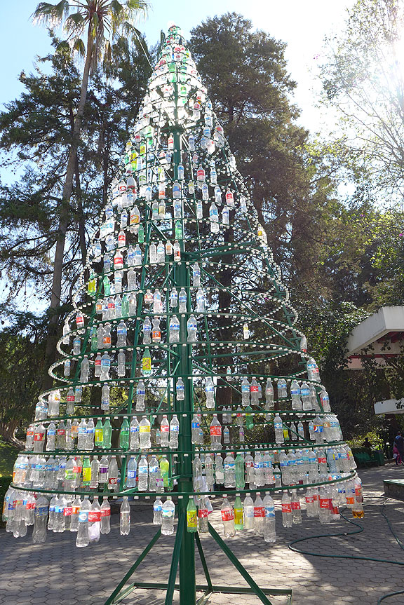 """And this hilarious """"tree"""" is in the Colomos park in Zapopan where we did a lot of exercise while we were in Guadalajara."""