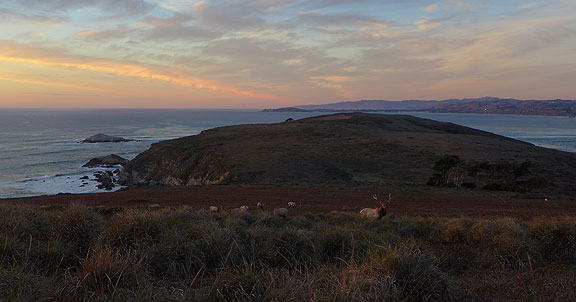 elk-and-sunset-over-tomales-pt_1050636