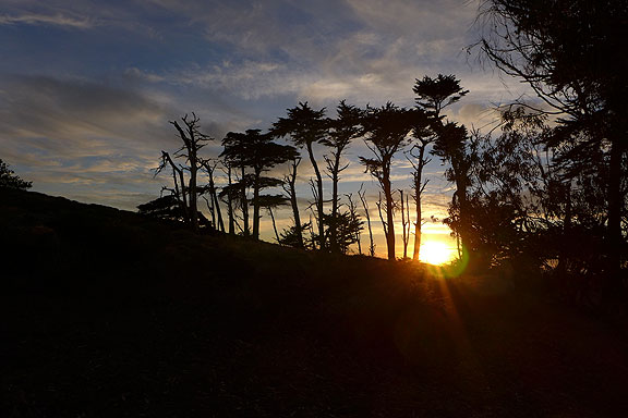 sunset-and-trees-tomales-pt-walk_1050630