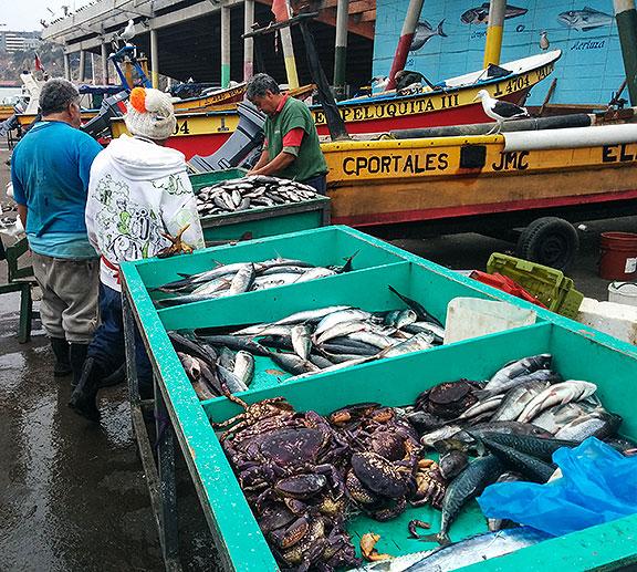 Fish! Fishermen!
