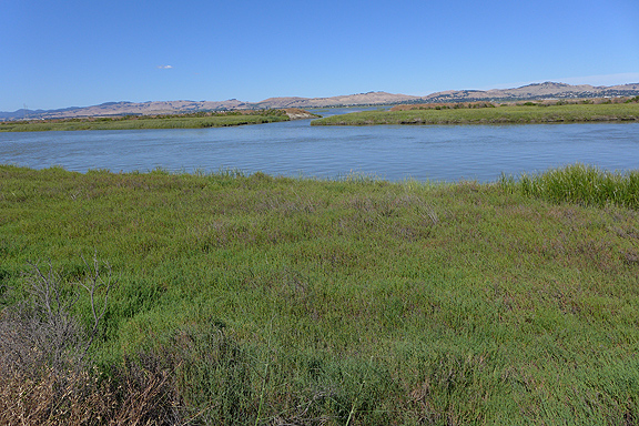 Dutchman Slough near the breach to Cullinan Ranch.