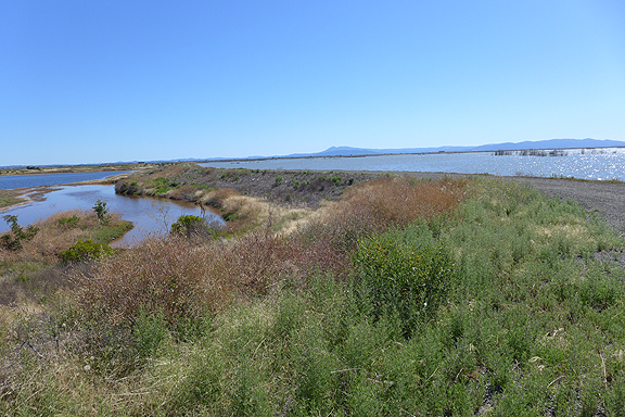 The eastern parcel is at left, not yet opened to the bay, and bay waters cover the larger Cullinan Ranch parcel on the other side of the levee. Both of these parcels lie north of Highway 37 and the restoration work has had to ensure that the road would remain above the waters and not suffer erosion from tides and wave action.