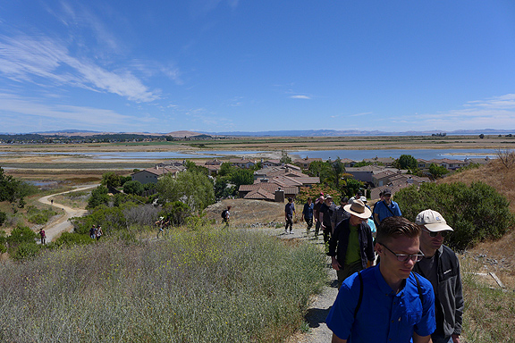 A full bus load of mud lovers, bird watchers, landscape engineers, hydrologists, citizen scientists, and radical librarians climbing a low ridge above Hamilton Field, once an airforce base with below sea level runways, now a showcase restoration project on the Marin County bay shore.