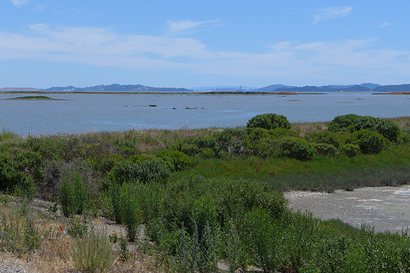You may be able to see the San Francisco skyline on the far horizon behind the San Rafael bridge. This view is from the marshlands along the north shore of San Pablo Bay.