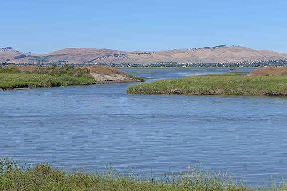 More recently restored wetlands near Vallejo.